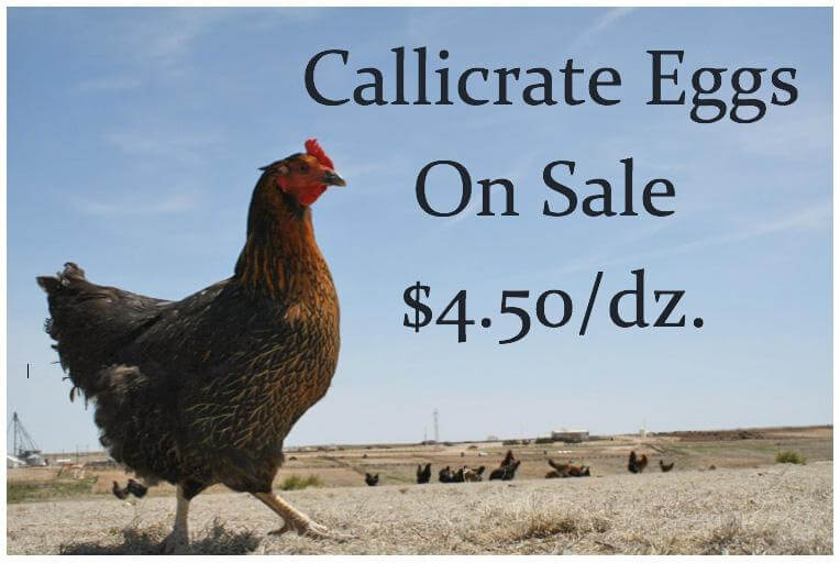 Wondering what to make for lunch?  The summer egg sale is here!